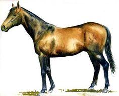 Race Horse - Green Desert Copyright Gaye Mulholland Horse Racing, Horses, Illustration, Green, Animals, Animaux, Horse, Illustrations, Animal
