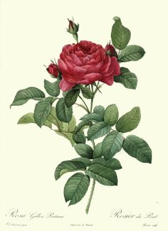 3.  LINE – FAR IN THE FRESH LAP OF THE CRIMSON ROSE  Rose – Rose. Roses are just prick teases. Literally. They tease you in. Then prick.