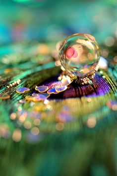 Iridescence ✿ water droplet on peacock feather
