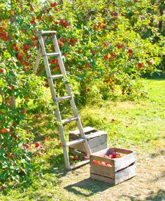 apple picking, one of my favorite things to do!
