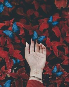 background, nature, hand and red