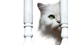 Fraidy Cat | Flickr : partage de photos !