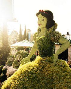 Snow White Topiary 030914