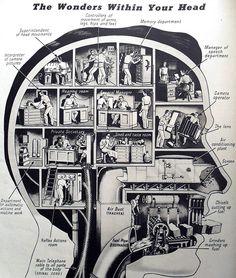 Cómo funciona nuestro cerebro #infografia #infographic #psychology