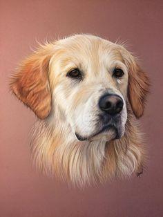sketches of elderly red retrievers Red Retriever, Golden Retriever Art, Animal Paintings, Animal Drawings, Art Drawings, Pastel Portraits, Dog Portraits, Color Pencil Art, Pastel Art