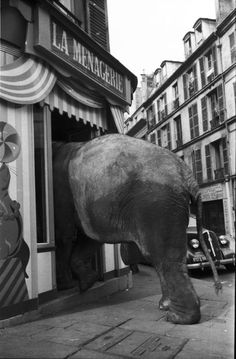 Could I have that order to go please?   La Menagerie (we really GOTTA have that talk about the elephant in the room~~)
