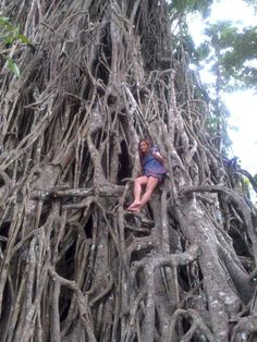 """It would take 60 men to encircle the  huge trunk of this """"Millenium"""" aged Balete tree."""