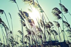 kikinda Utility Pole, Explore, Landscape, Nature, Photos, Scenery, Pictures, Landscape Paintings, The Great Outdoors