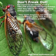 Hear that buzzing noise? What is it? http://www.facebook.com/myfivebest