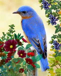 Gyönyörű kék madár