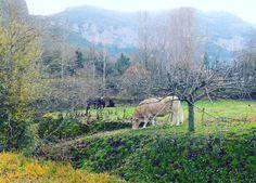Aire puro #naturaleza #españa2015 #traveler #animal #instapic #verde #montaña #paisaje #landscape #airepuro # by neusvarela