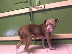 www.PetHarbor.com pet:LACO1.A5008116
