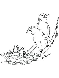 bird nest coloring page.html