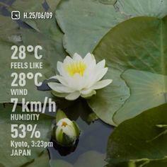 渉成園(東本願寺)の蓮の花