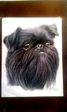 Brussels griffon comissioned by artist Hector Baptista