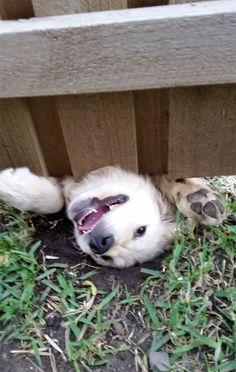 Cachorros que gostam de olhar a rua 11 - Cris Figueired♥