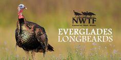 Everglades Longbeards Branding