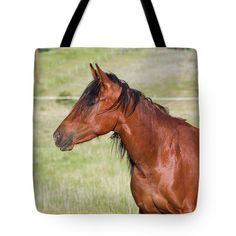 Barrel Horse, Image Gifts, Thing 1, Gifts For Horse Lovers, Printed Bags, Beautiful Horses, Bag Sale, Tote Bags, Fine Art America