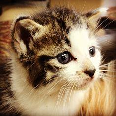 Kitty kitty - @mcspca- #webstagram