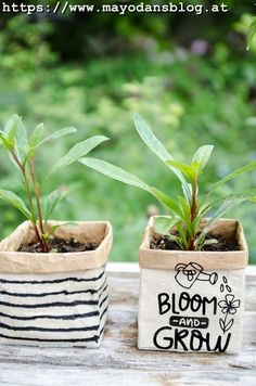 Basteln und selbermachen Upcycling idea for summer flower sowing in a tetra pack Should I Let My Adu Tetra Pack, Fleurs Diy, Diy Décoration, Back Gardens, Summer Flowers, Garden Projects, Amazing Gardens, Potted Plants, Garden Landscaping