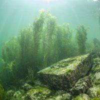 Zürichsee / Tauchen im Süsswasser / Galerie | Nies.ch Lake Zurich, Fresh Water, Diving, Levitate, Scuba Diving