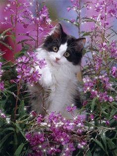 Кошечука в цветах - анимация на телефон №1232333