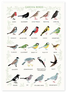 Solitaire Print. I think most of these birds appear in my garden.