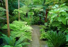 Garden Design Awesome Tropical Garden Landscaping Ideas 36 - Ordinary gardens nowadays don't give enough effect or life in the surroundings. There are different kinds of garden and one […] Small Tropical Gardens, Tropical Garden Design, Tropical Plants, Small Gardens, Back Gardens, Hawaiian Plants, Exotic Plants, Small Backyard Landscaping, Tropical Landscaping