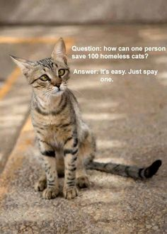 true. spay and neuter your pets