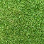 クラピア<1>芝生に代わる新しいグランドカバーの評判