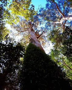 Promise #ZiMike  Location  #Australia  Photo  #ElectraAsteri