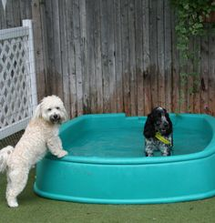 """A great way to ensure your furry friend stays cool is to fill a baby wading pool with water in your backyard...  but remember to always keep an eye on your pal no matter how good a swimmer he or she is and no matter how deep the water is. If you have an in-ground pool that your dog loves to jump in, consider putting a lifejacket on your dog when frolicking outside or purchase a pet ramp to make it easy for them to get out."""