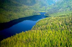 6,000 Acres of Old Growth Forests Slated for Logging, the Largest Sale in Decades  bigthorne650