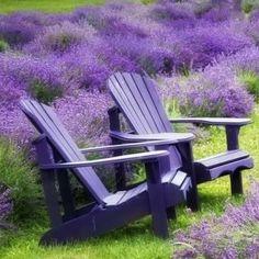 Lavander, Lavender Fields, Lavender Garden, Purple Rain, Shades Of Purple, Beautiful Gardens, Provence, Lilac, Bliss