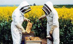 bee keeping.
