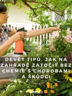 Winter Garden, Permaculture, Pergola, Flora, Outdoor Structures, Plants, Socha, Gardening, Chemistry