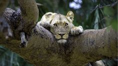 Safari in Africa – Luxury African Safaris · Yellow Zebra Safaris
