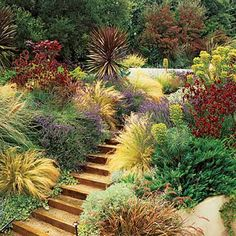Drought tolerant, yet colorful and textured landscape. I guess this is what we West Texans are going to have to start planting!!