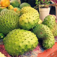 Soursop. Also called graviola, is a sweet flesh fruit that is the basis for several beverages, ice creams Health Benefits of Soursop:   A decoction of the young shoots or leaves is regarded as a remedy for gall bladder trouble, as well as coughs, catarrh, diarrhea, dysentery, fever and indigestion.  Mashed leaves are used as a poultice to alleviate eczema and other skin problems and rheumatism.