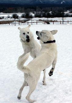 fun at the dog park!