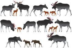 Moose #vector #animal #mammal #moose #elk #calf #wild #collection #ungulate #hoofed