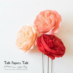 4 5 Juliet David Justin rose  Bareroot rose   by TalkPapersTalk