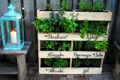 8 Excellent Pallet Garden Ideas For Your Backyard Herb Garden Pallet, Gutter Garden, Diy Herb Garden, Pallets Garden, Vegetable Garden, Garden Ideas, Garden Projects, Plant Ladder, Floating Flowers