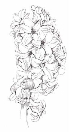 Hyacinth - by Kat Spencer