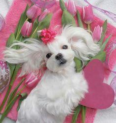 ♥ LOVE ♥  https://www.pinterest.com/bunchou2/cutefunny%E4%B8%80%E9%83%A8%E7%A7%81%E3%81%8C%E6%92%AE%E3%81%A3%E3%81%9F%E3%82%82%E3%81%AE/