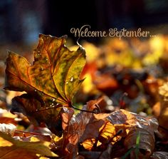 Welcome September! Thank goodness you're here...