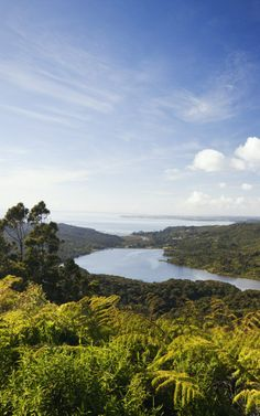 View of the Waitakere Ranges Regional Park from Arataki Visitors Centre, Waitakere Ranges, Auckland, North Island, New Zealand