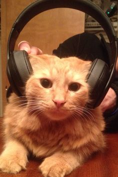 Buddy listening to music