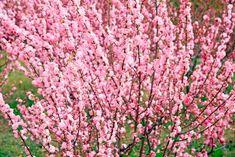 Top 20 des plus beaux arbustes à fleurs - M6 Deco.fr Horticulture, Cactus, My House, Patio, Inspiration, Outdoor, Roses, Garden, Garden Shrubs