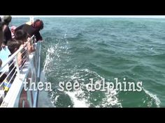SeaQuest Snorkel & Dolphins
